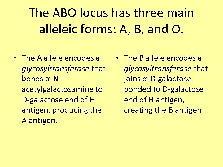 The ABO locus has three main alleleic forms: A, B, and O. • The