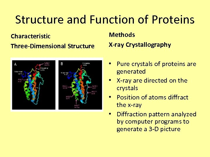 Structure and Function of Proteins Characteristic Three-Dimensional Structure Methods X-ray Crystallography • Pure crystals