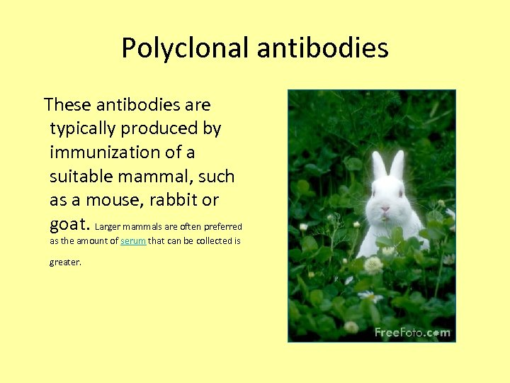 Polyclonal antibodies These antibodies are typically produced by immunization of a suitable mammal, such