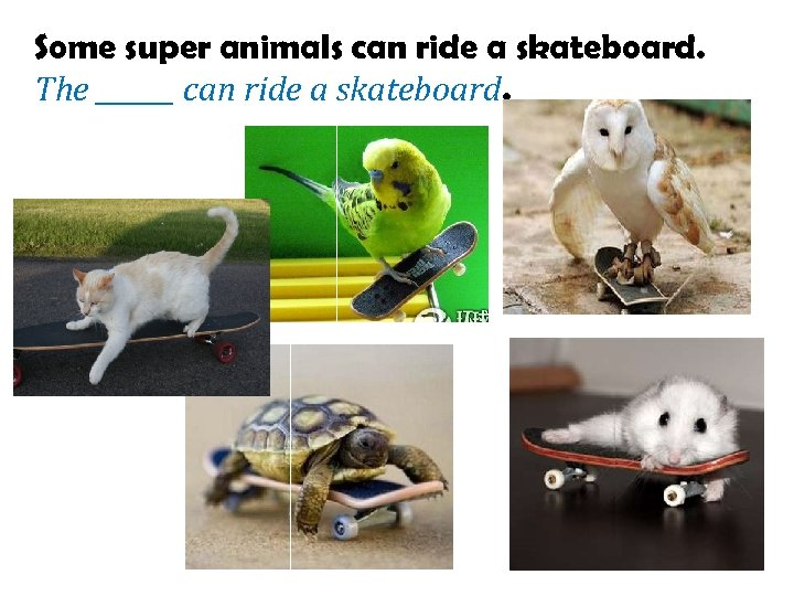 Some super animals can ride a skateboard. The ______ can ride a skateboard.