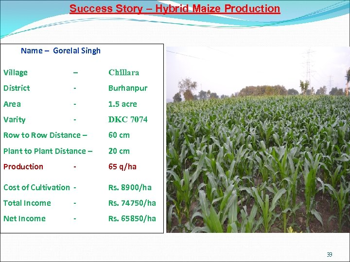 Success Story – Hybrid Maize Production Name – Gorelal Singh Village – Chillara District