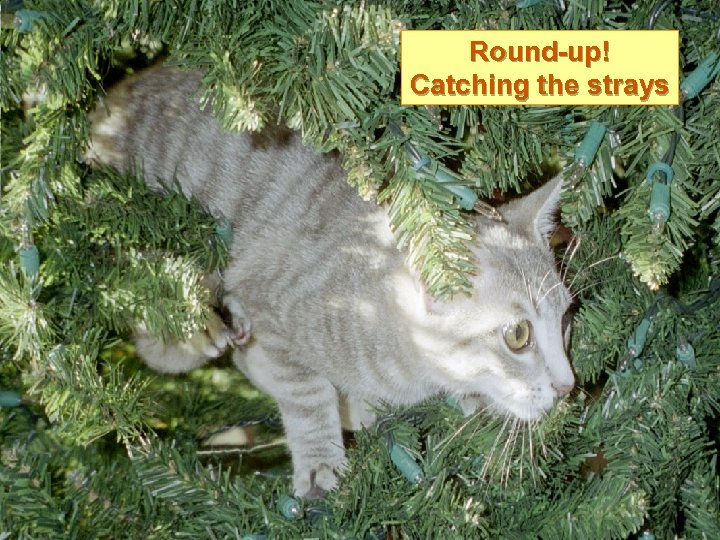 Round-up! Catching the strays