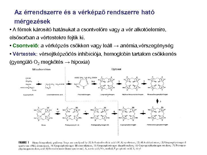 Az érrendszerre és a vérképző rendszerre ható mérgezések • A fémek károsító hatásukat a