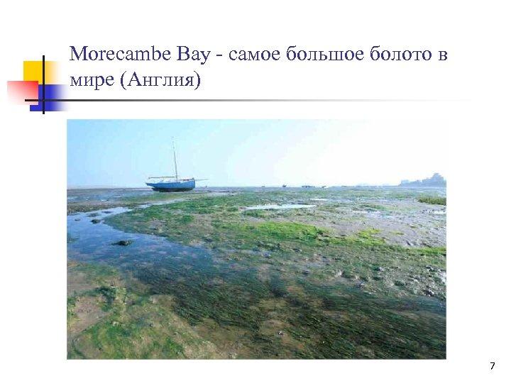 Morecambe Bay - самое большое болото в мире (Англия) 7