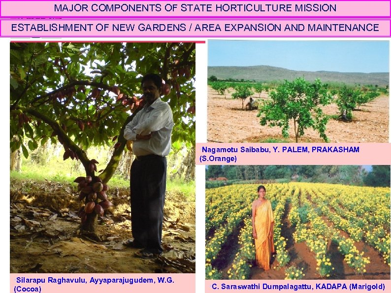 MAJOR COMPONENTS OF STATE HORTICULTURE MISSION ESTABLISHMENT OF NEW GARDENS / AREA EXPANSION AND