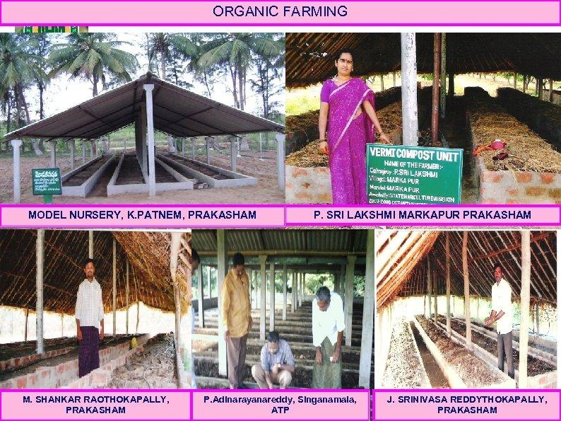 ORGANIC FARMING MODEL NURSERY, K. PATNEM, PRAKASHAM M. SHANKAR RAOTHOKAPALLY, PRAKASHAM P. SRI LAKSHMI