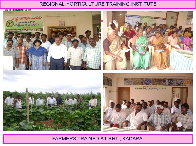 REGIONAL HORTICULTURE TRAINING INSTITUTE FARMERS TRAINED AT RHTI, KADAPA.