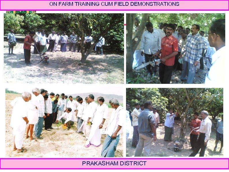 ON FARM TRAINING CUM FIELD DEMONSTRATIONS PRAKASHAM DISTRICT