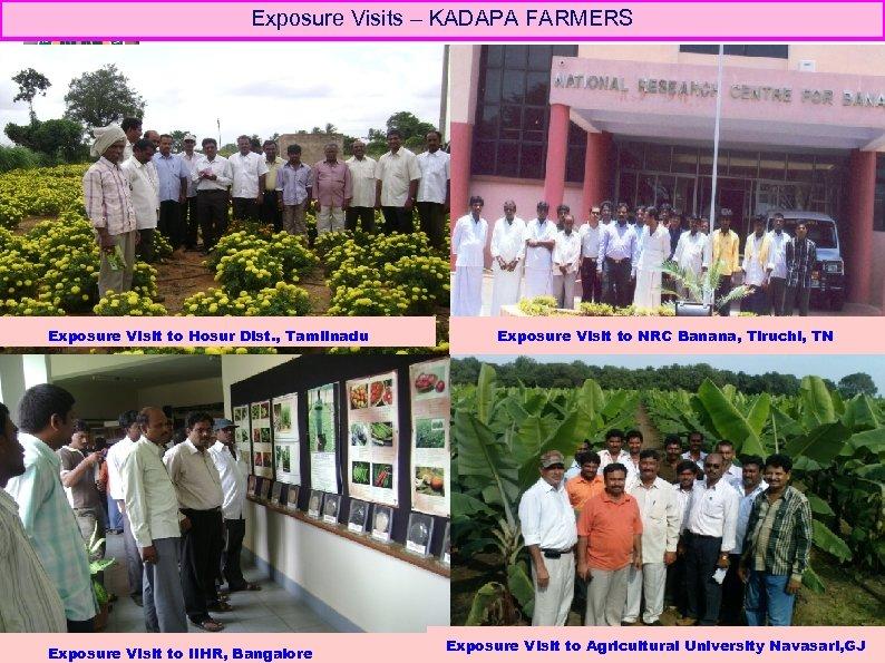 Exposure Visits – KADAPA FARMERS Exposure Visit to Hosur Dist. , Tamilnadu Exposure Visit
