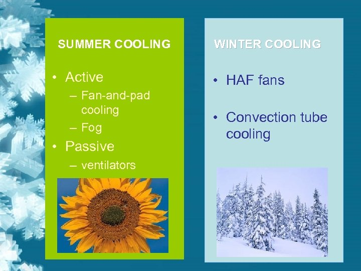 SUMMER COOLING • Active – Fan-and-pad cooling – Fog • Passive – ventilators WINTER