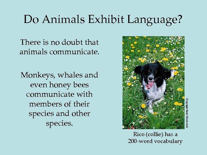 Do Animals Exhibit Language? There is no doubt that animals communicate. Copyright Baus/ Kreslowski