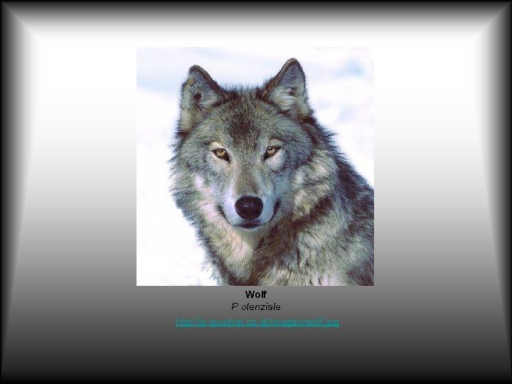 Wolf P otenziale http: //p-quadrat. co. at/images/wolf. jpg