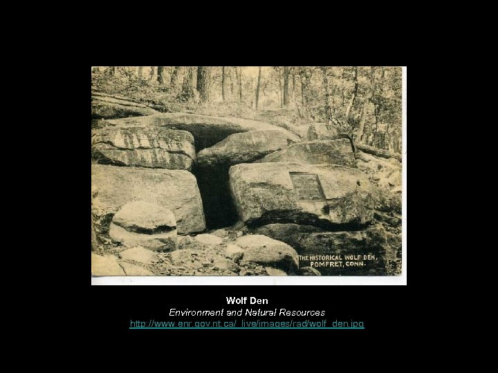 Wolf Den Environment and Natural Resources http: //www. enr. gov. nt. ca/_live/images/rad/wolf_den. jpg