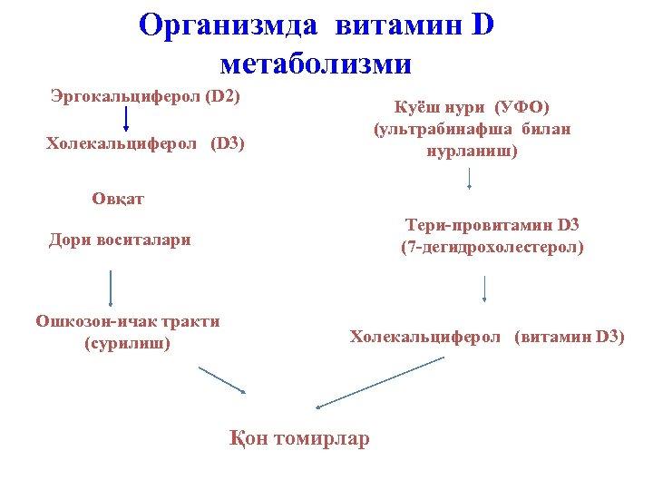 Организмда витамин D метаболизми Эргокальциферол (D 2) Куёш нури (УФО) (ультрабинафша билан нурланиш) Холекальциферол