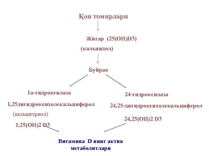 Қон томирлари Жигар (25(ОН)D 3) (кальцидол) Буйрак 1 а-гидроксилаза 1, 25 дигидроксихолекальциферол 24 -гидроксилаза