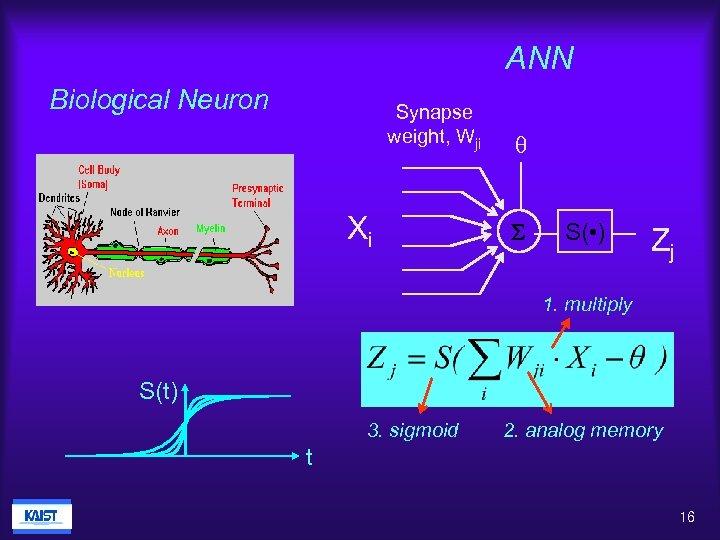 ANN Biological Neuron Synapse weight, Wji Xi q S S( • ) Zj 1.