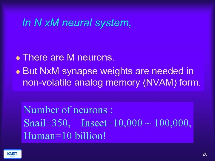 In N x. M neural system, ¨ There are M neurons. ¨ But Nx.