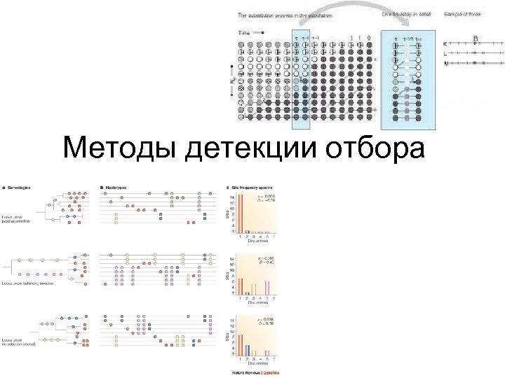 Методы детекции отбора