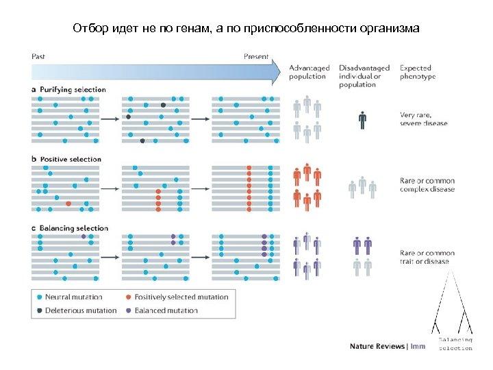 Отбор идет не по генам, а по приспособленности организма