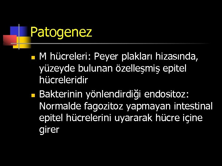 Patogenez n n M hücreleri: Peyer plakları hizasında, yüzeyde bulunan özelleşmiş epitel hücreleridir Bakterinin
