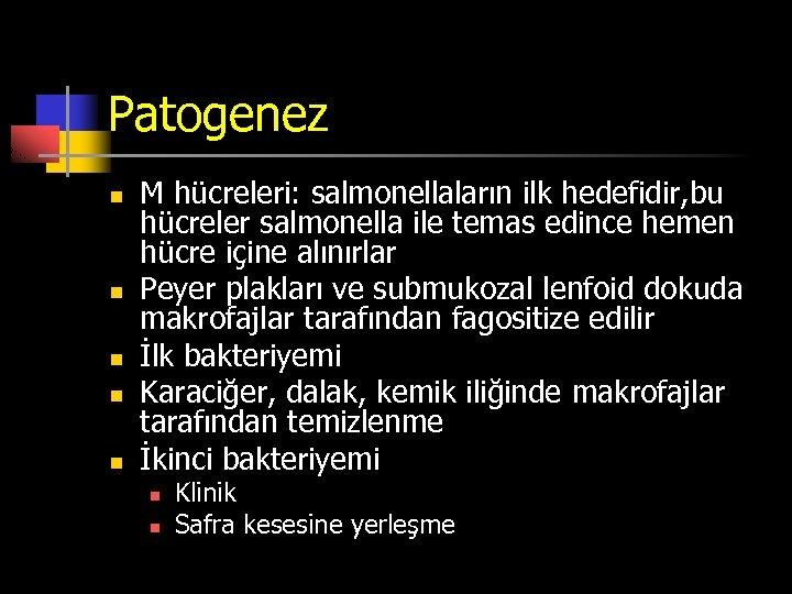 Patogenez n n n M hücreleri: salmonellaların ilk hedefidir, bu hücreler salmonella ile temas