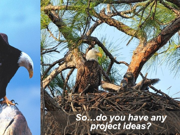So…do you have any project ideas?