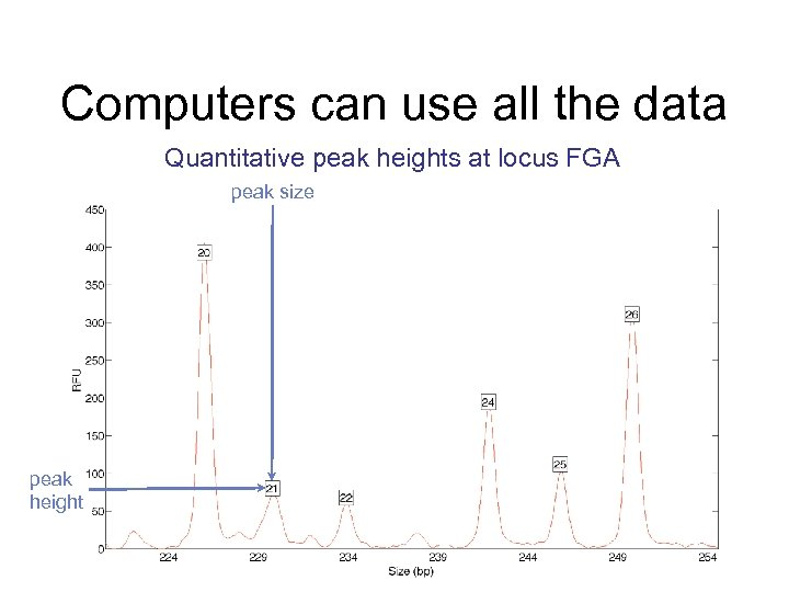 Computers can use all the data Quantitative peak heights at locus FGA peak size