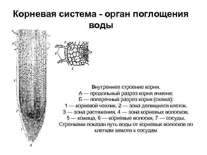 Вязание на 2 спицах подследников