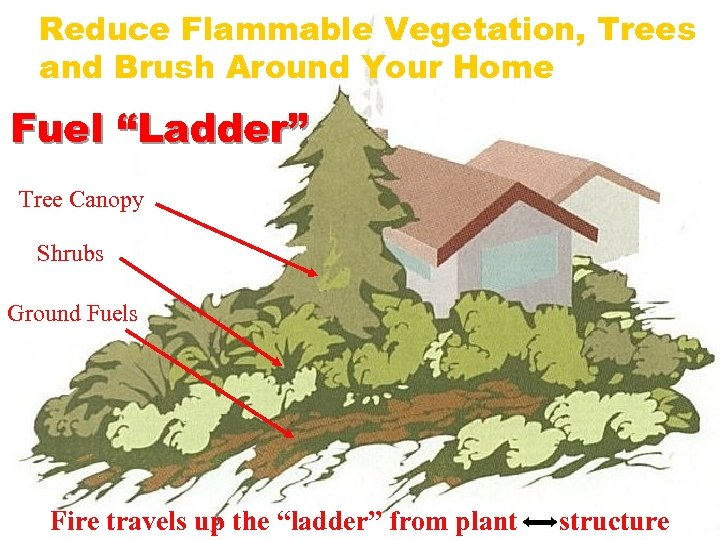 "Reduce Flammable Vegetation, Trees and Brush Around Your Home Fuel ""Ladder"" Tree Canopy Shrubs"