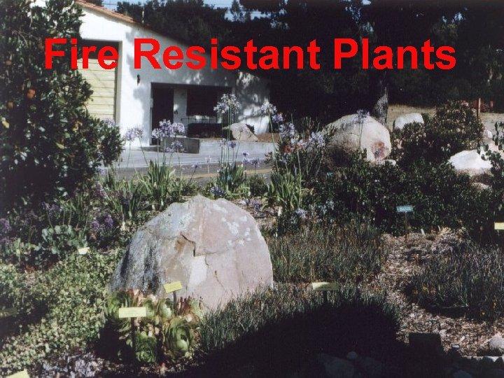 Fire Resistant Plants