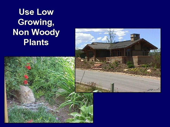 Use Low Growing, Non Woody Plants