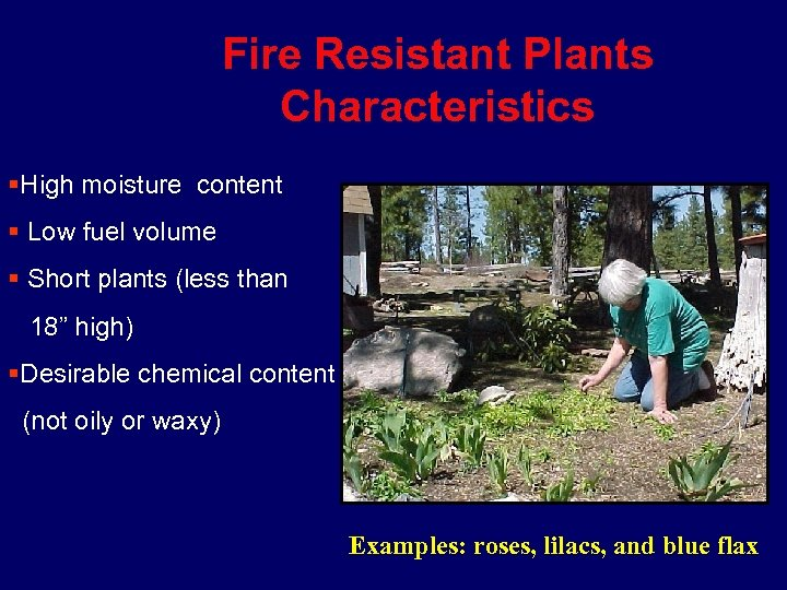Fire Resistant Plants Characteristics §High moisture content § Low fuel volume § Short plants