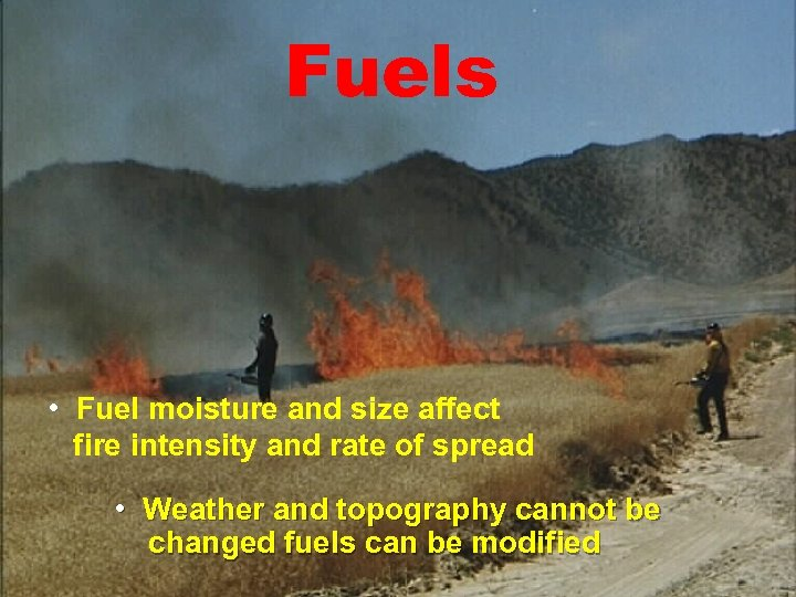 Fuels • Fuel moisture and size affect fire intensity and rate of spread •