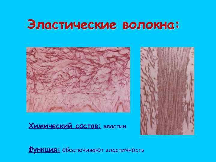 Эластические волокна: Химический состав: эластин Функция: обеспечивают эластичность