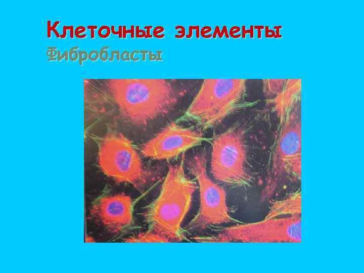 Клеточные элементы Фибробласты