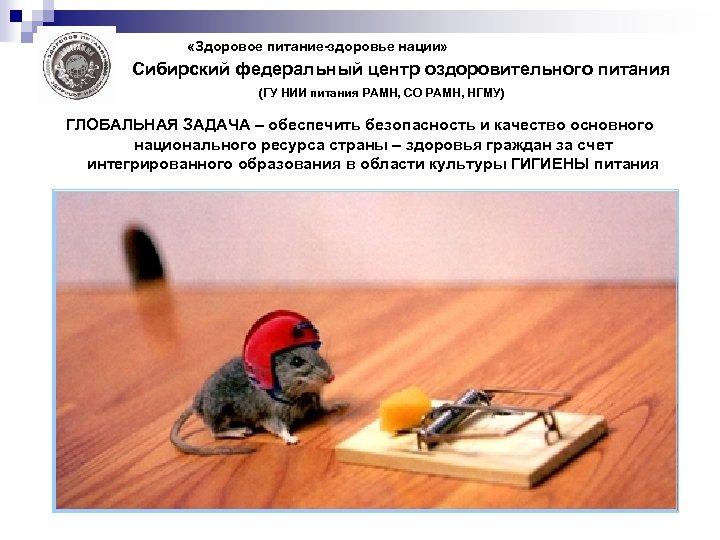 «Здоровое питание-здоровье нации» Сибирский федеральный центр оздоровительного питания (ГУ НИИ питания РАМН, СО
