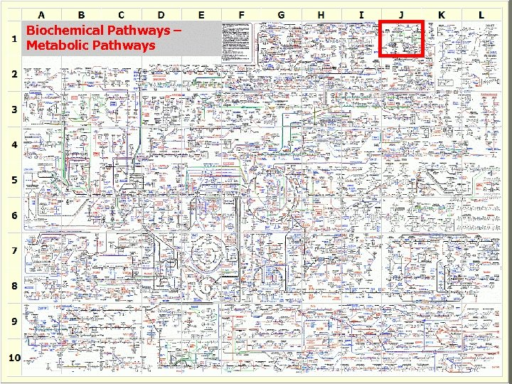 Biochemical Pathways – Metabolic Pathways