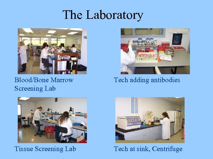 The Laboratory Blood/Bone Marrow Screening Lab Tech adding antibodies Tissue Screening Lab Tech at