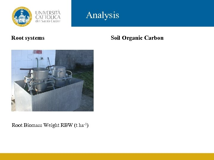 Analysis Root systems Root Biomass Weight RBW (t ha-1) Soil Organic Carbon