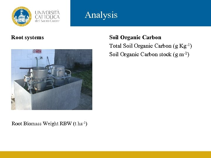 Analysis Root systems Root Biomass Weight RBW (t ha-1) Soil Organic Carbon Total Soil
