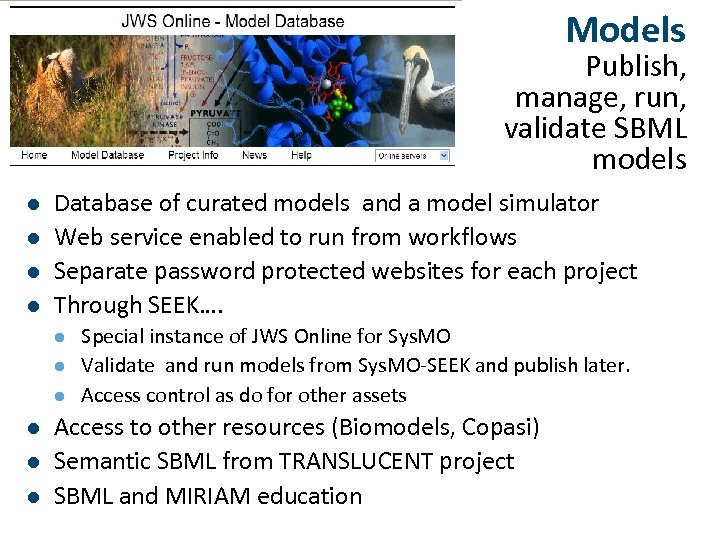 Models Publish, manage, run, validate SBML models l l Database of curated models and
