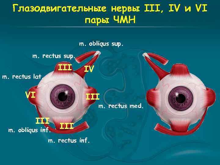 Глазодвигательные нервы III, IV и VI пары ЧМН m. obliqus sup. m. rectus sup.