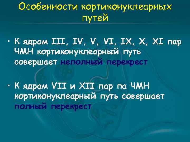 Особенности кортиконуклеарных путей • К ядрам III, IV, V, VI, IX, X, XI пар