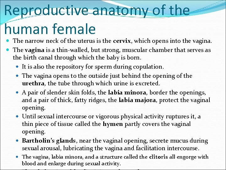 Reproductive anatomy of the human female The narrow neck of the uterus is the