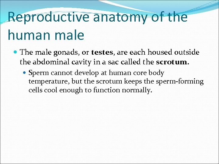 Reproductive anatomy of the human male The male gonads, or testes, are each housed