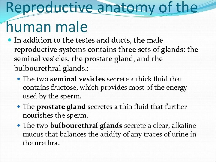 Reproductive anatomy of the human male In addition to the testes and ducts, the