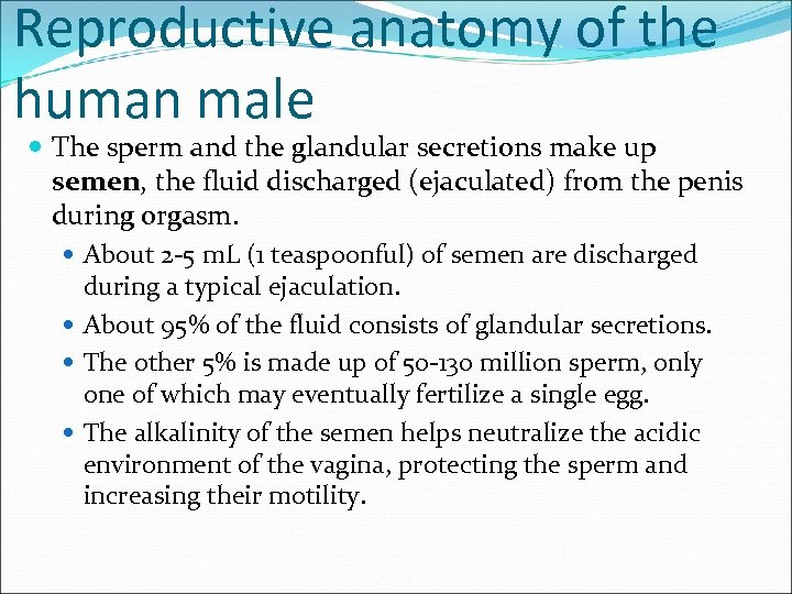 Reproductive anatomy of the human male The sperm and the glandular secretions make up
