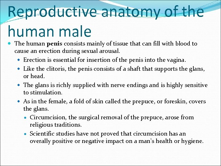 Reproductive anatomy of the human male The human penis consists mainly of tissue that