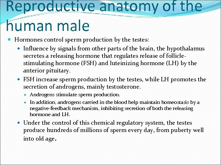 Reproductive anatomy of the human male Hormones control sperm production by the testes: Influence