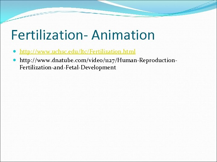 Fertilization- Animation http: //www. uchsc. edu/ltc/Fertilization. html http: //www. dnatube. com/video/1127/Human-Reproduction. Fertilization-and-Fetal-Development